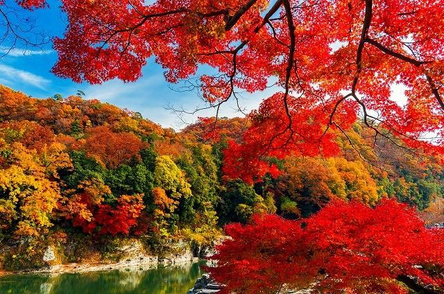 森林 紅葉