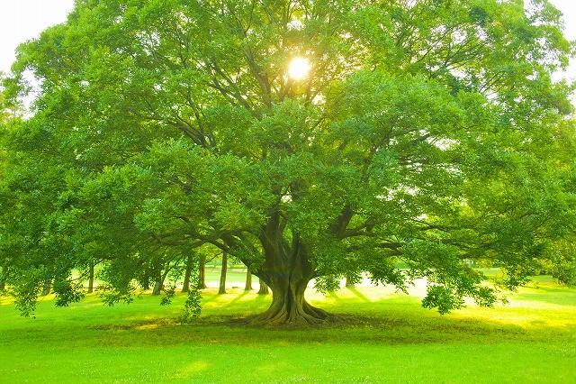 森林 木 環境
