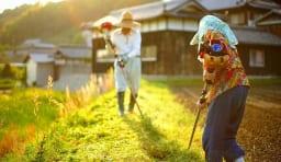 農家 農業